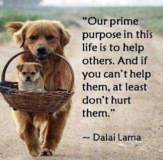 compassion-quotes-7