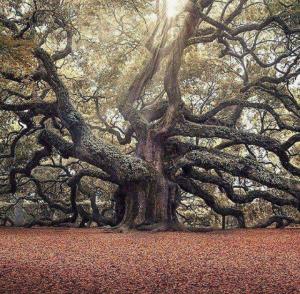 Angelic Tree